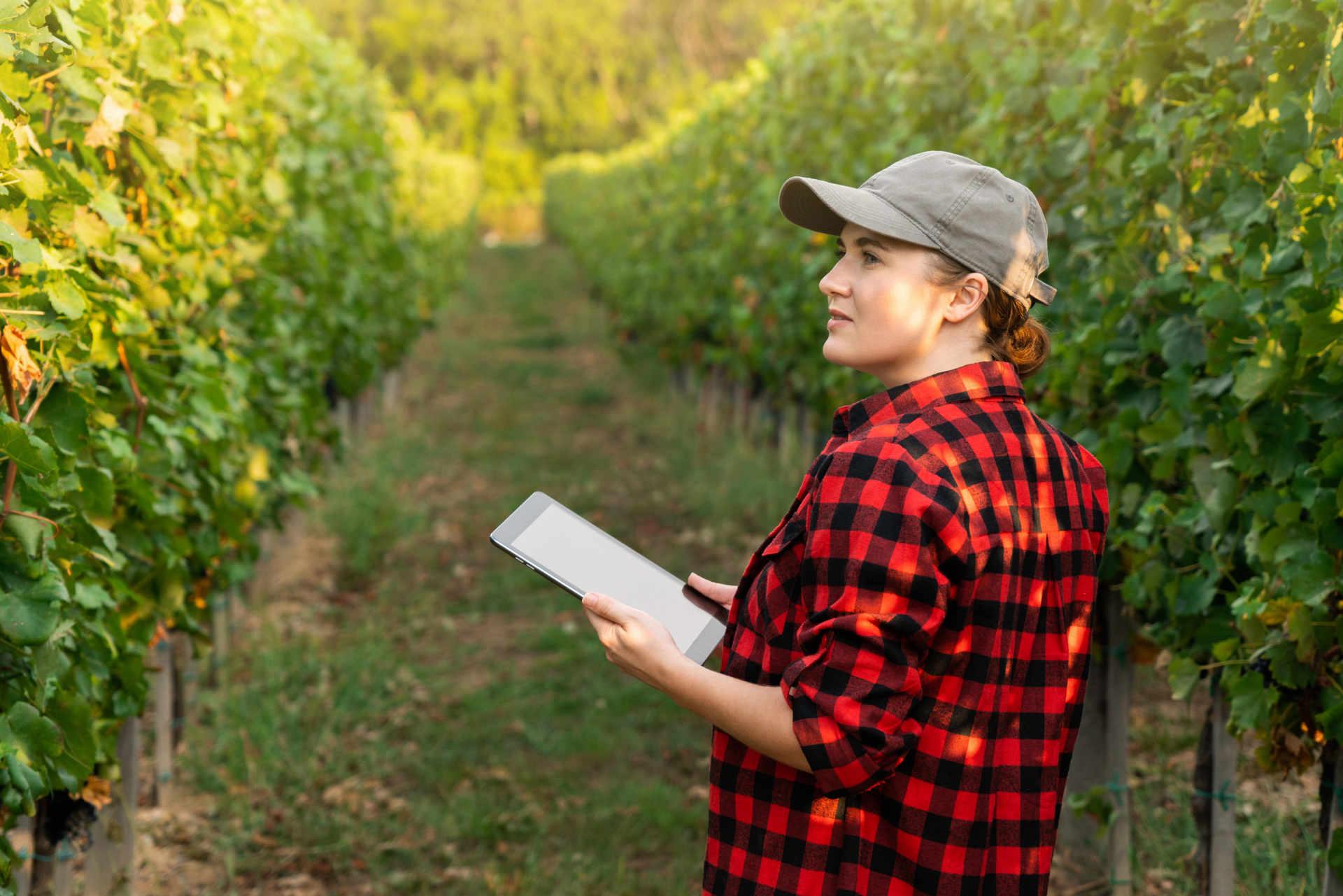 Export di vino italiano: il mercato investe sul digitale