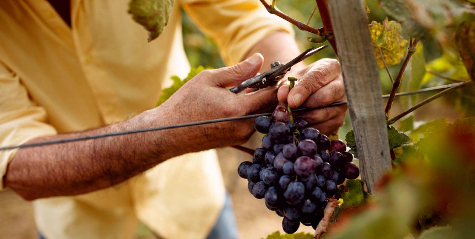 Covid e export: piccoli produttori in difficoltà: è tempo di nuove strategie